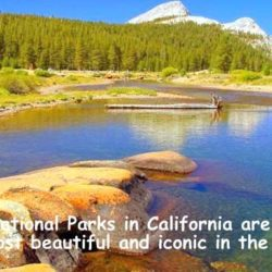 National Parks In California Are Renowned For Their Splendor